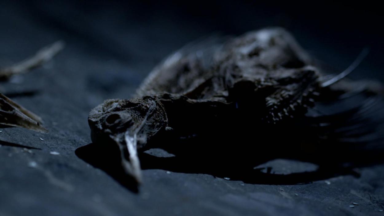 S02.F13: Geisterjäger-Spezial