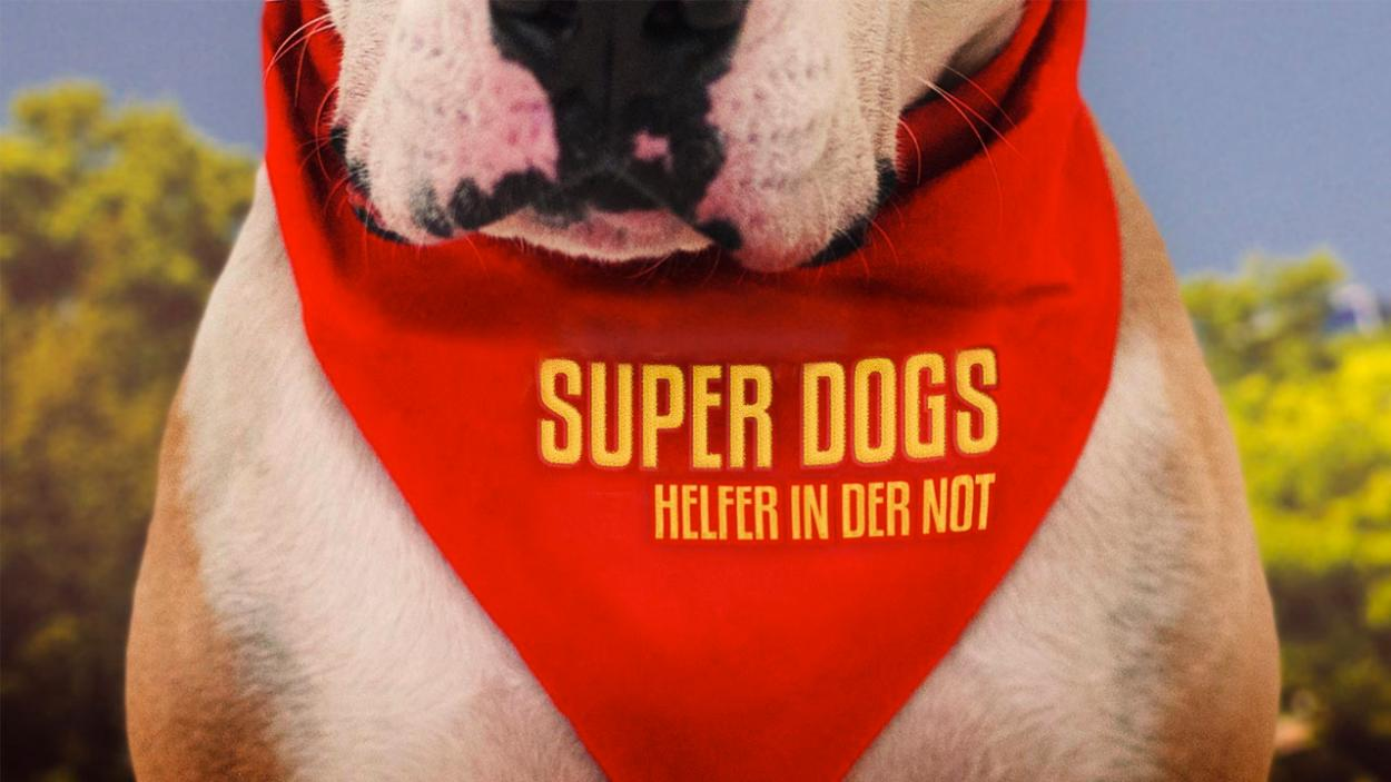 Online-Premiere: Super Dogs
